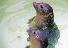 11 zeehonden, Ecomare
