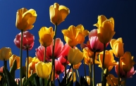 Als de lente komt ...
