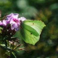 locatie: Botanische Tuinen Fort Hoofddijk