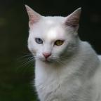 Dit is Hugo. Hugo heeft niks met de tentoonstelling te maken, hij komt gewoon regelmatig in onze tuin, waar hij het dan eens moet zien te worden met onze eigen kater Bram. Heel bijzonder zo'n bruin en zo'n blauw oog, vind je niet?